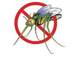 комарац